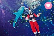 聖誕巡遊★聖誕老公公都溜來玩