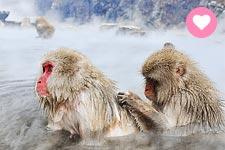 【猴子愛泡湯】兩人同行折5千