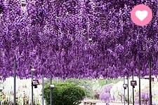 【花見日本】一次賞三種花景