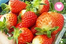 【韓國滑雪】現摘草莓超美味